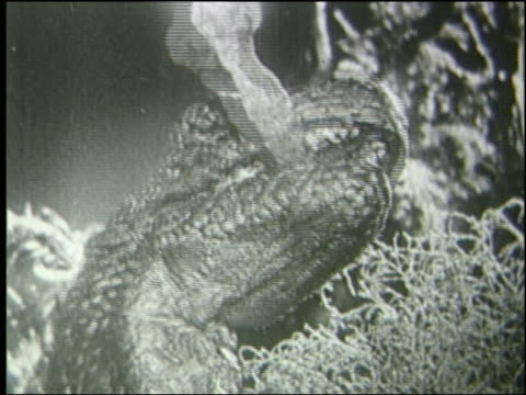 b/w close up tyrannosaurus rex with burning torch in mouth - tyrannosaurus rex stock videos and b-roll footage