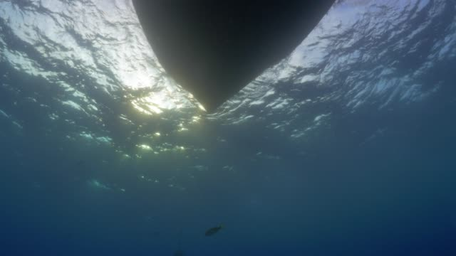 close up: underside of boat floating in water - inquadratura estrema dal basso video stock e b–roll