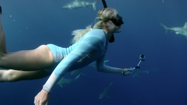 close up underwater shot of a girl swimming through a school of sharks - shark stock videos & royalty-free footage