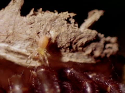close up - partiell lichtdurchlässig stock-videos und b-roll-filmmaterial
