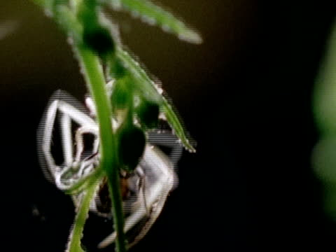 close up - 運ぶ点の映像素材/bロール
