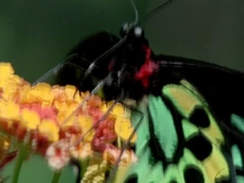 close up - naso di animale video stock e b–roll
