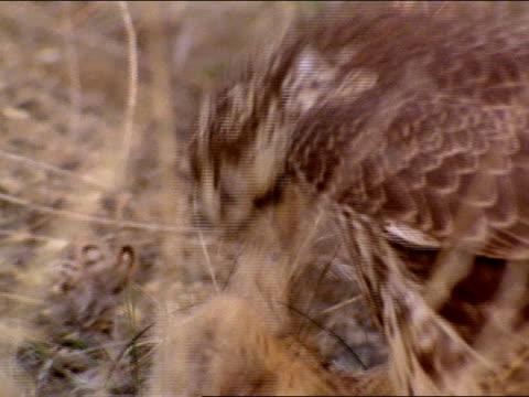 close up - 鳥の鉤爪点の映像素材/bロール