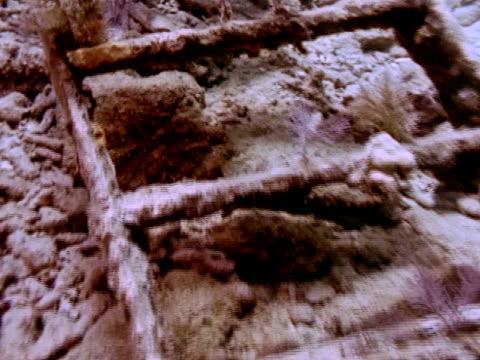 stockvideo's en b-roll-footage met close up - rankpootkreeft