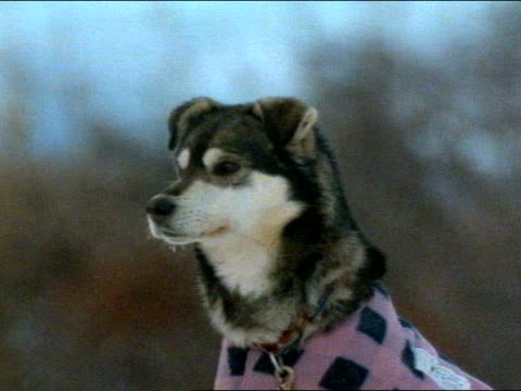 close up - dog coat stock videos and b-roll footage