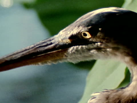 vidéos et rushes de close up - water bird