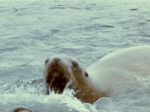 close up - kelp stock videos & royalty-free footage