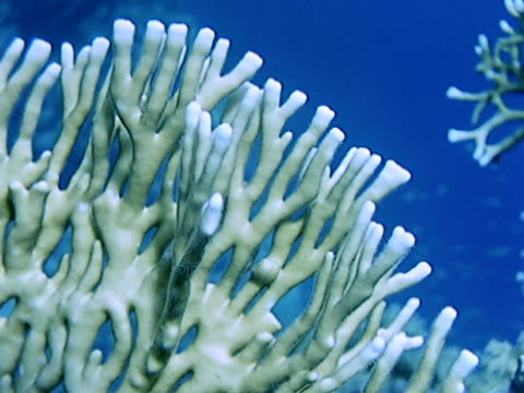 close up - hard coral stock videos & royalty-free footage