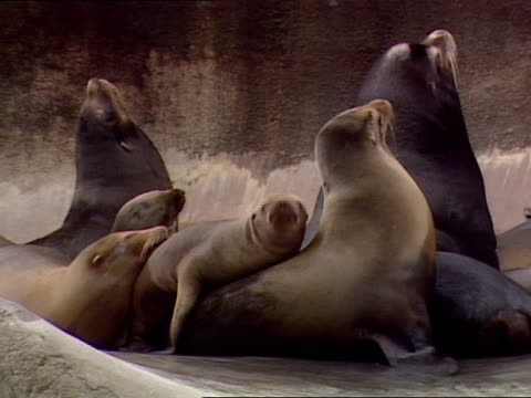 close up - pod group of animals stock videos & royalty-free footage