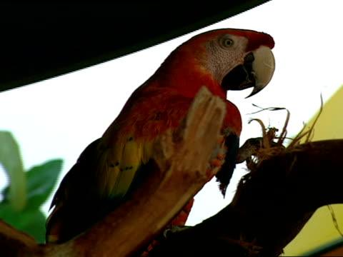 vidéos et rushes de close up - se lisser les plumes