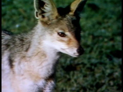 vídeos y material grabado en eventos de stock de close up - oreja animal