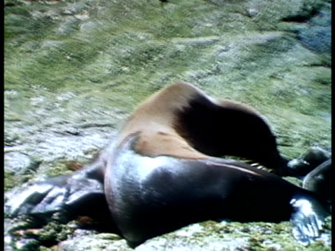 close up - seal pup stock videos & royalty-free footage