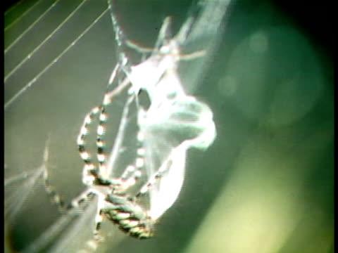 close up - クモ類点の映像素材/bロール