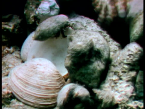 close up - aquatic organism stock videos & royalty-free footage