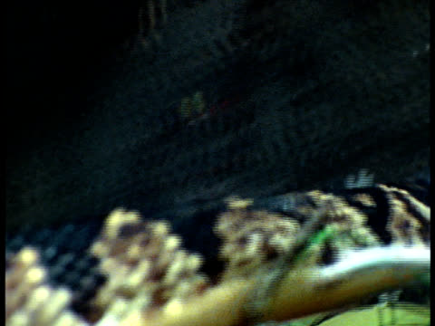 close up - bushmaster snake stock videos & royalty-free footage