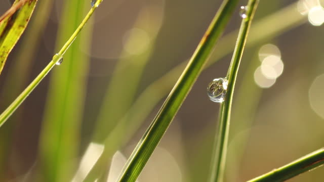 close up view of raindrops on green grasses - focus on foreground stock videos & royalty-free footage