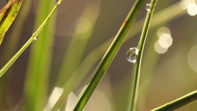 närbild av regndroppar på gröna gräs - förgrundsfokus bildbanksvideor och videomaterial från bakom kulisserna