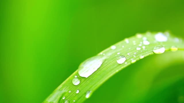 close up: water droplets on blade of grass - blade of grass stock videos & royalty-free footage