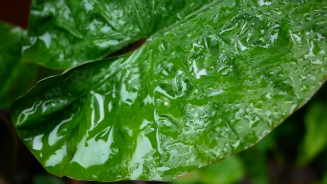 close up water drops on green leaf surface - reforestation stock videos and b-roll footage