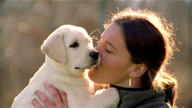 vídeos de stock e filmes b-roll de close up woman holding yellow lab puppy/ maine - cachorro