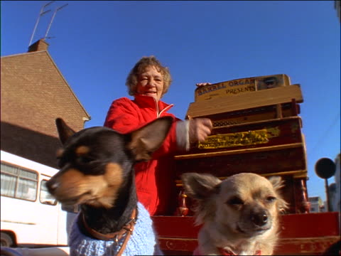 close up pan of woman playing organ grinder with small dogs / portobello road market, london - 1997 stock videos and b-roll footage