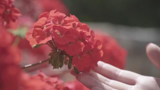 vídeos y material grabado en eventos de stock de close up, woman smells flower - oler