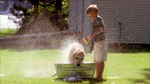 vídeos de stock, filmes e b-roll de close up young boy washing dog in bucket w/hose on lawn / dog shaking water - molhado