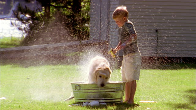 close up young boy washing dog in bucket w/hose on lawn / dog shaking water - shaking stock-videos und b-roll-filmmaterial