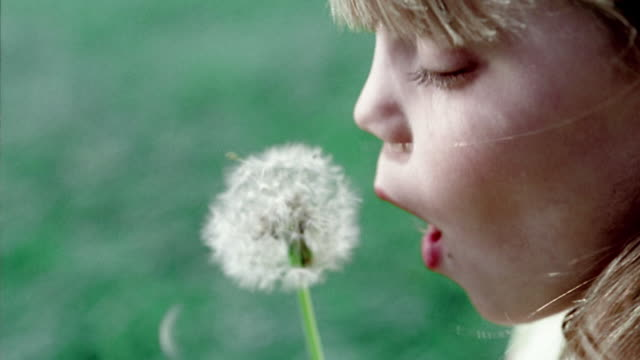 close up young girl blowing on seeds of dandelion flower - dandelion stock videos & royalty-free footage