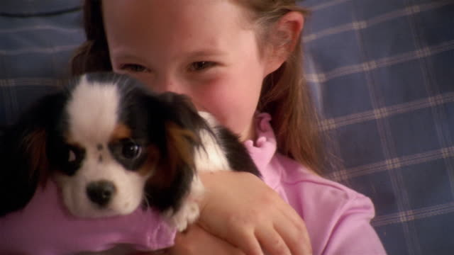 close up young girl smiling and holding puppy / kissing puppy + looking at cam - spaniel stock videos and b-roll footage