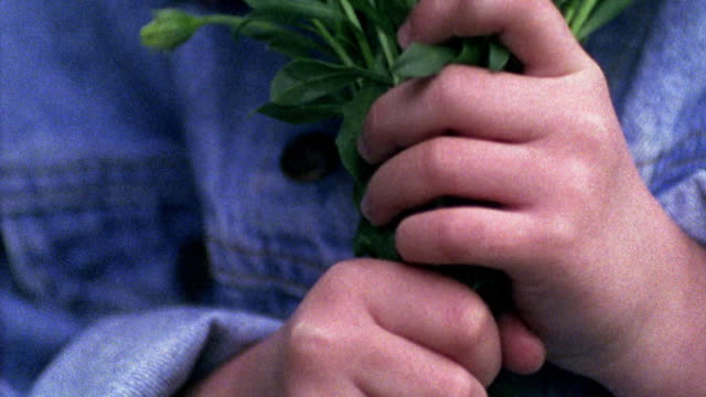 vídeos de stock e filmes b-roll de close up young girl's hands holding bunch of purple flowers / missouri - ramo parte de uma planta