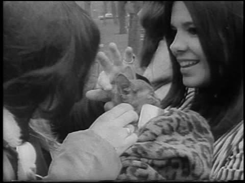 b/w 1967 close up young woman petting kitten held by other woman at bein / detroit / newsreel - manifestante video stock e b–roll
