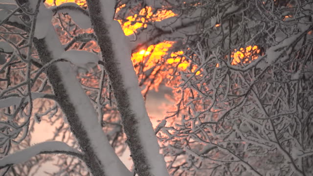 close ups of snow covered branches at sunrise in the norwegian arctic circle - white stock videos & royalty-free footage