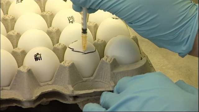 close view of a syringe being used to extract liquid from a small bottle to be put into an egg during testing for bird flu and h5n1 during an... - liquid stock videos & royalty-free footage