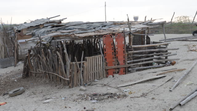 Close view on a barn with donkeys and pigs The barn is made of wood branches and is located in the slum of Piura Peru The landscape is mostly sandy...