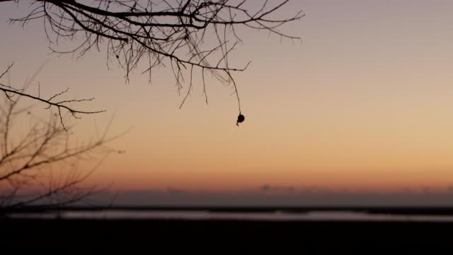 closed bud on tree dawn - wiese stock videos & royalty-free footage