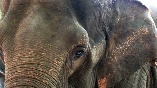 vídeos y material grabado en eventos de stock de cerrado hasta elefantes - orfanato