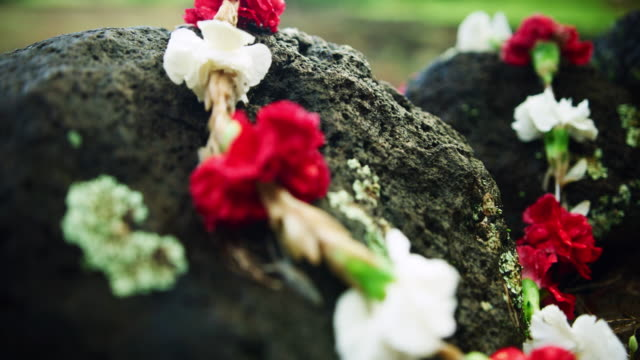 close-up: a black lava rock with a carnation lei on it - oahu, hawaii - carnation flower stock videos & royalty-free footage