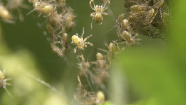 closeup, a crowd of baby spiders - large group of animals stock videos and b-roll footage