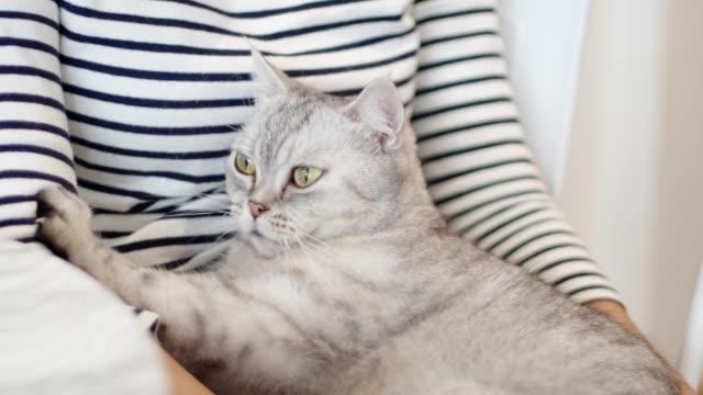 vídeos y material grabado en eventos de stock de primer plano un gato lindo es un masaje para su dueño. - dar masajes