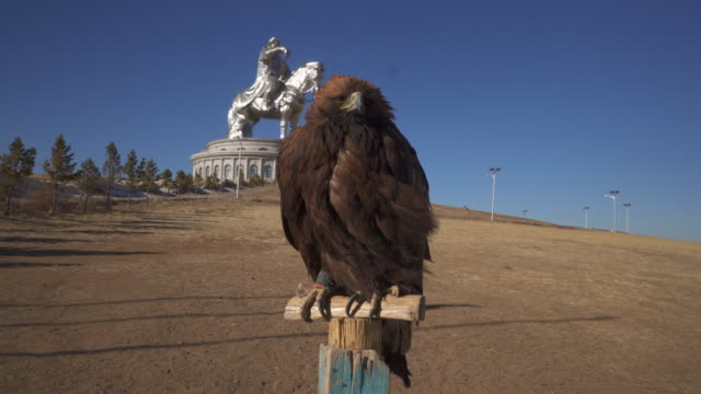 vídeos de stock e filmes b-roll de close-up: a giant hawk perched on a wood post with a genghis khan statue in the distance - ulaanbaatar, mongolia - ulan bator