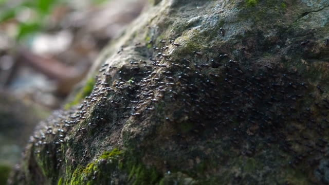 close-up aerial view of black ants moving on the ground - legno video stock e b–roll