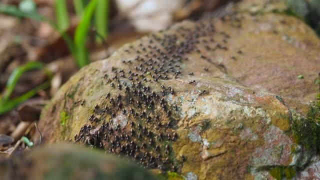 vídeos de stock, filmes e b-roll de vista aérea de close-up de formigas pretas se movendo no chão - animal abdomen
