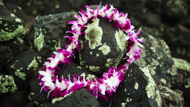 stockvideo's en b-roll-footage met close-up: an orchid lei laying on a stack of lava rocks - oahu, hawaii - guirlande