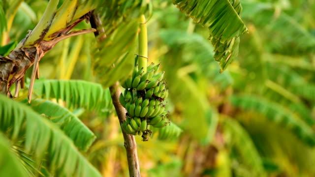 close-up at banana - banana stock videos & royalty-free footage
