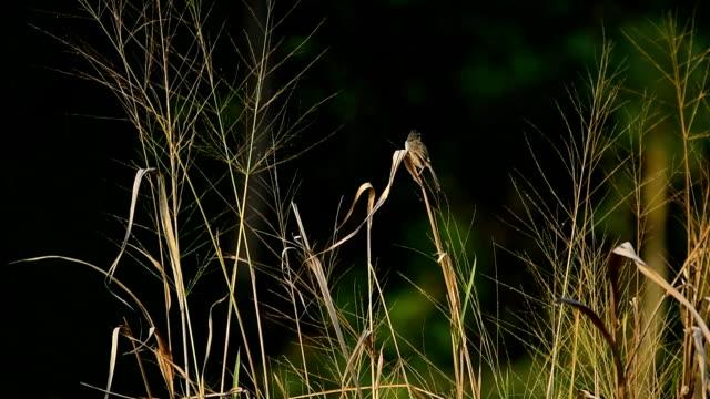 stockvideo's en b-roll-footage met close-up op vogel - kleine groep dieren