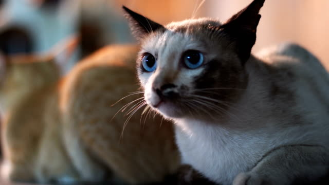 Close-up at Cat