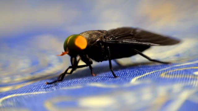 close-up at fly - housefly stock videos & royalty-free footage