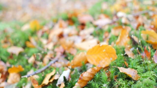 close-up autumn leaf on ground