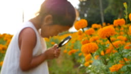 Close-up beauty girl using magnifying glass in gold floral field. Concept of self learning trips lifestyle in springtime. Slowmotion video footage full HD 1920x1080. High speed camera shot 50 fps.